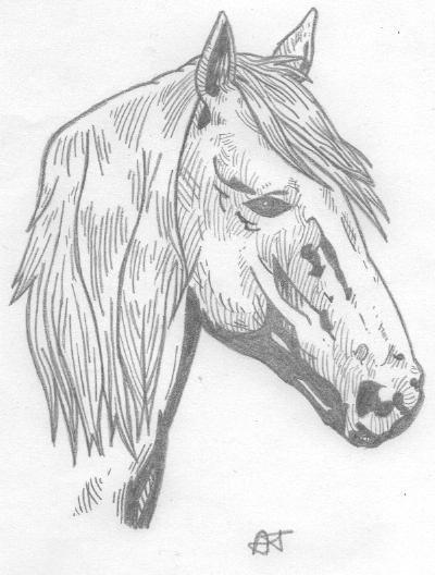 Magnifique cheval new dessins - Dessin de cheval magnifique ...